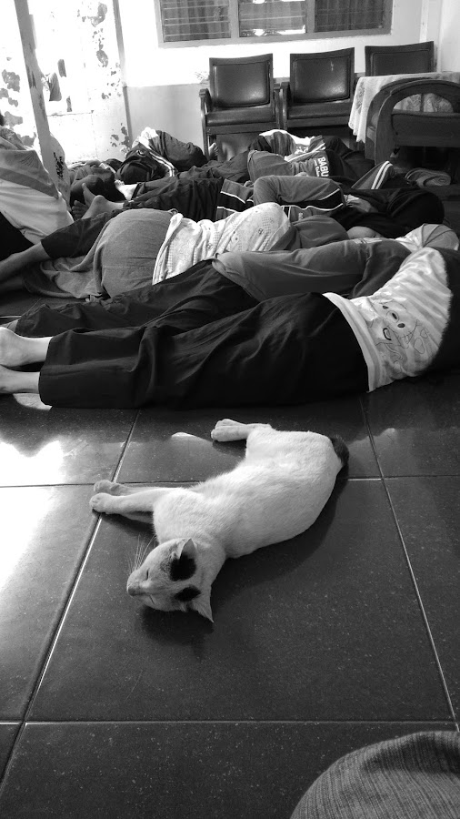 Sleeping by Gia Gusrianto - Animals - Cats Kittens ( photographer, black and white, animals, people, photography,  )