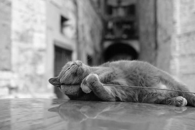 Voglio vivere così...  di Antonio Dambrosio