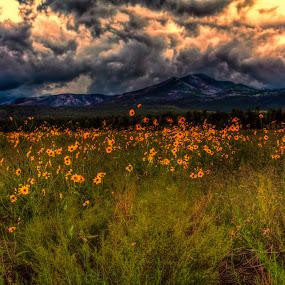 by Bob Murray - Landscapes Sunsets & Sunrises