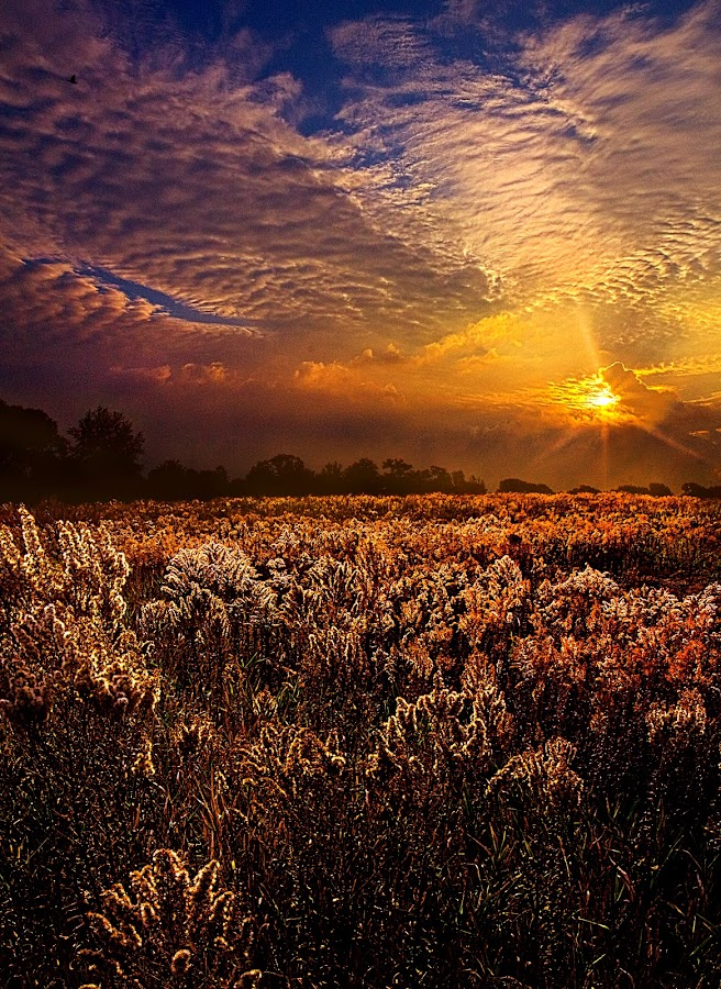 A Quiet Winter by Phil Koch - Landscapes Prairies, Meadows & Fields ( natural light, wisconsin, vertical, summer. spring, photograph, environement, farmland, yellow, leaves, phil koch, spring, photography, sun, love, farm, nature, autumn, horizons, flowers, inspired, clouds, office, orange, green, twilight, agriculture, horizon, scenic, morning, portrait, field, winter, red, national geographic, blue, seasons, serene, sunset, fall, peace, meadow, sunrise, earth, landscapes, floral, inspirational )