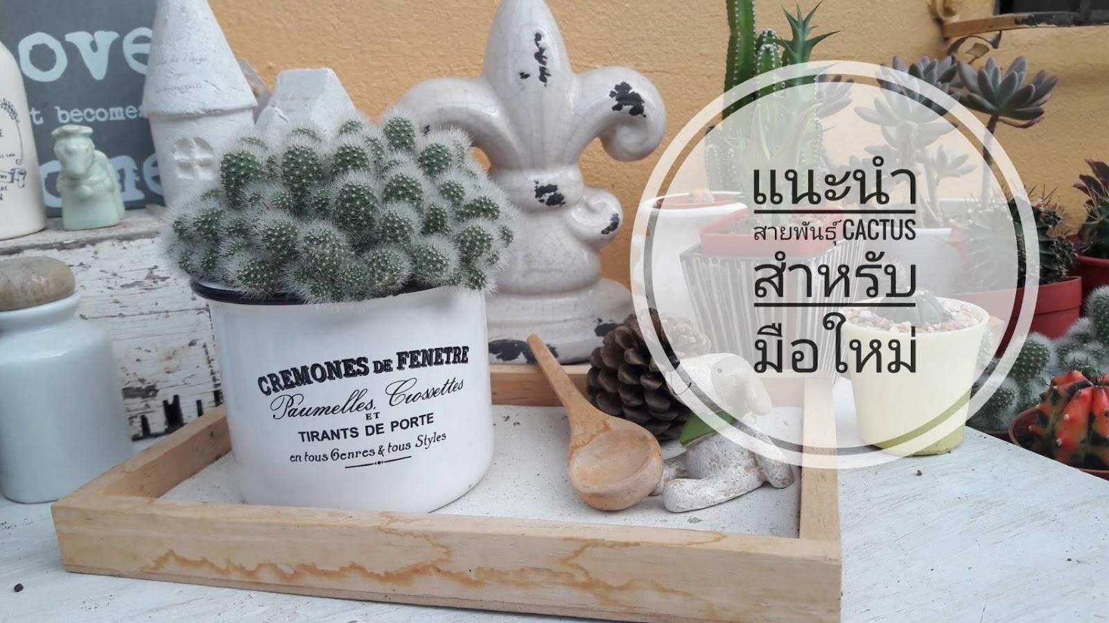 แนะนำสายพันธุ์ Cactus สำหรับมือใหม่
