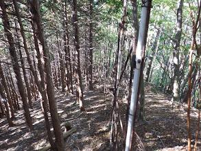林道をパスし尾根沿いに(柵沿い)