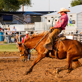 Saddle bronc riding by Scott Thomas - Sports & Fitness Rodeo/Bull Riding ( horse, nature, rodeo, ride, bronc )