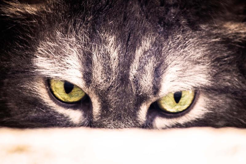Gatto di g.paciphoto