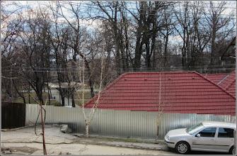Photo: Mesteacan (Betula) - de pe Str. Libertatii - 2017.02.24