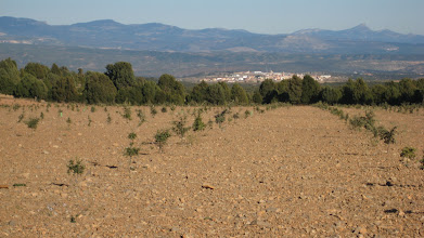 Photo: Truffle Plantation in Sarrion, Aragon, Spain