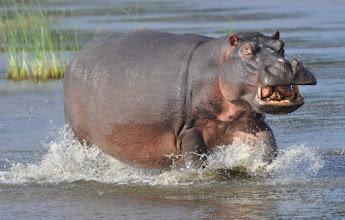 Photo: iSimangaliso Wetland Reserve, South Africa