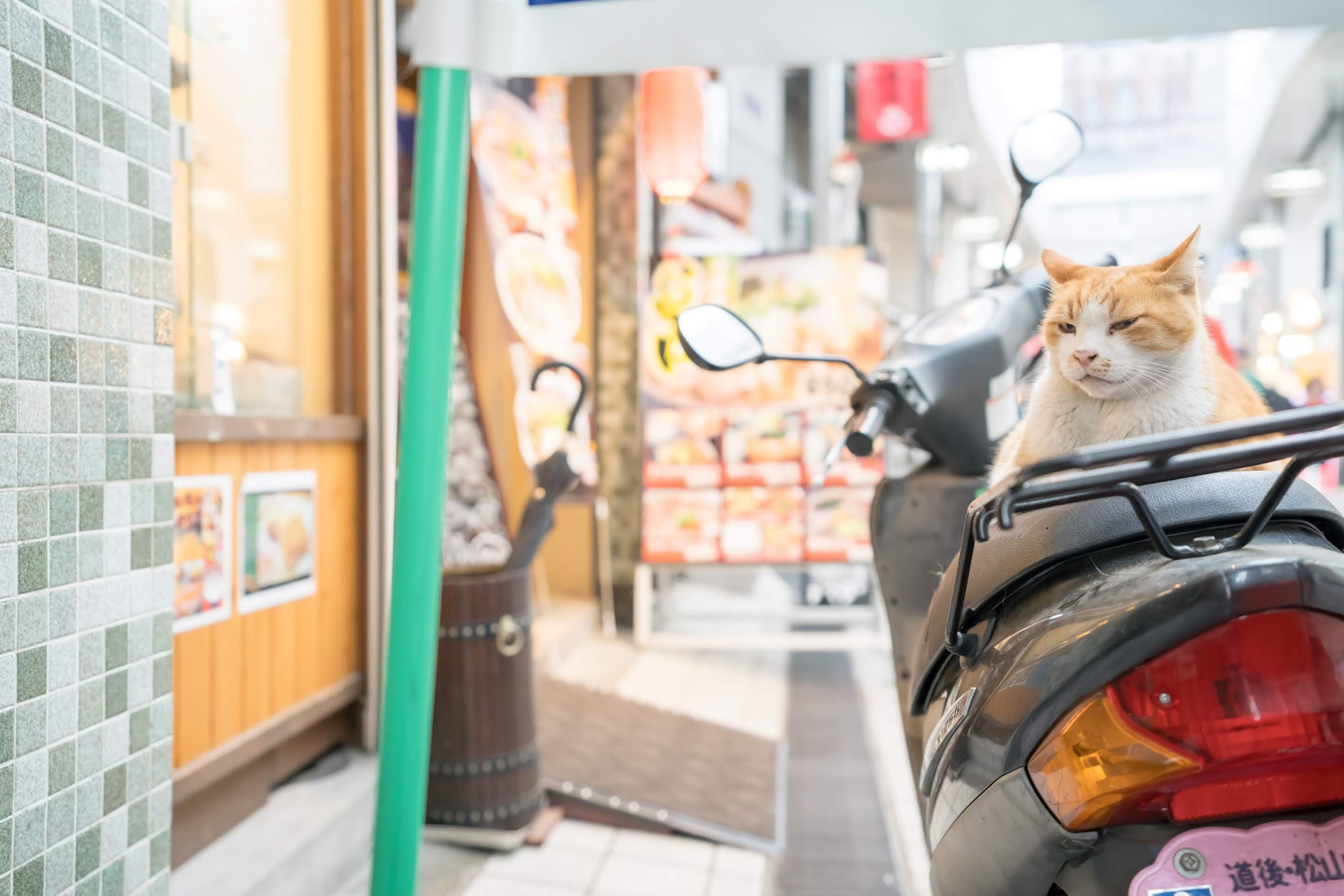 Dogo Shopping Arcade Cat1