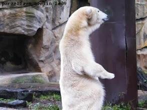 Photo: Gianna schaut aufgeregt zu den Braunbaeren ;-)