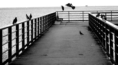 Photo: Pigeons and a Heron await the sun's rise at the wharf in Sechelt BC