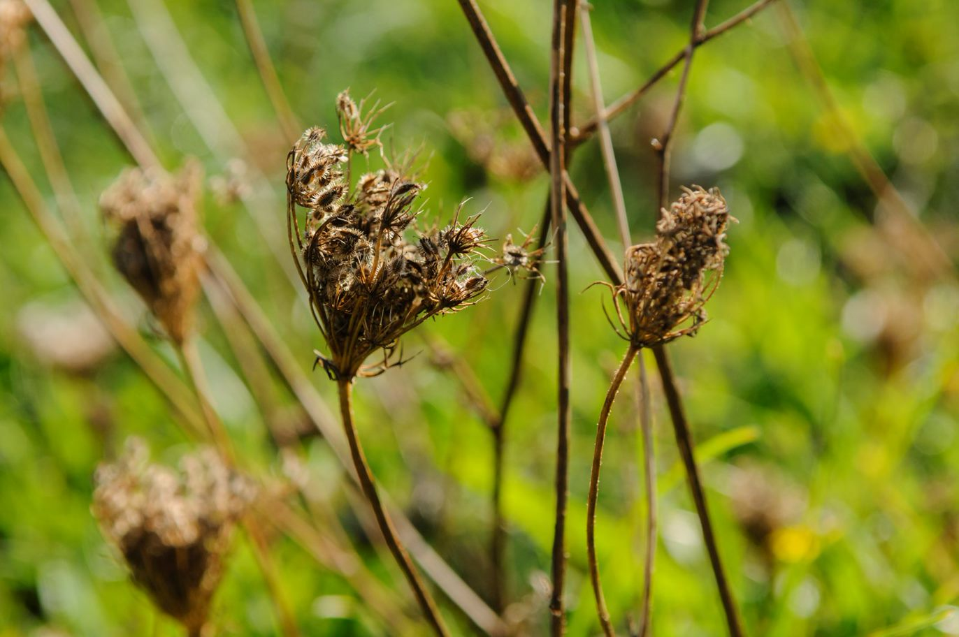 Afbeelding met plant  Automatisch gegenereerde beschrijving