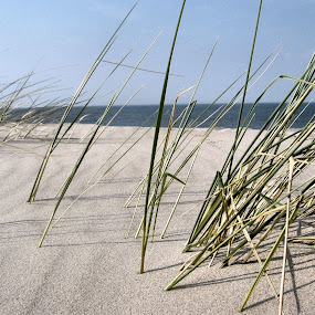 Dünengras by Justus Böttcher - Nature Up Close Sand