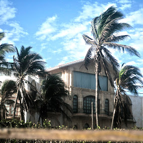 Palms and home by Cristobal Garciaferro Rubio - Buildings & Architecture Homes ( wind, sky, house, palms )