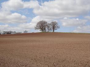 Photo: Potato fields