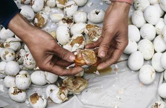 Photo: 04509 広州市/清平自由市場/孵化寸前のニワトリの卵