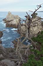Photo: Point Lobos, CA