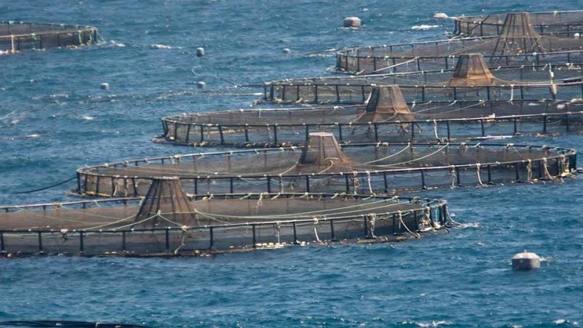 El sector acuícola andaluz genera más 1.000 empleos directos.