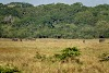 Sri. Lanka Wilpattu National Park . Elephant herd