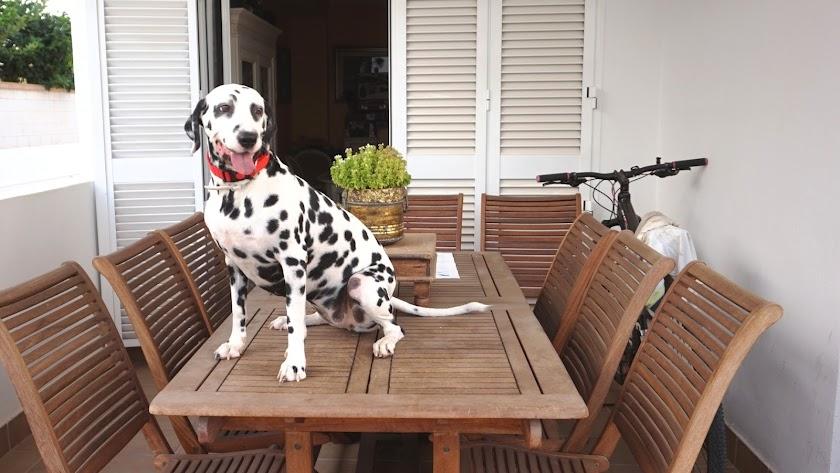 Los perros, el mejor amigo del ser humano en las duras y en las maduras. Foto: Ricardo Alba
