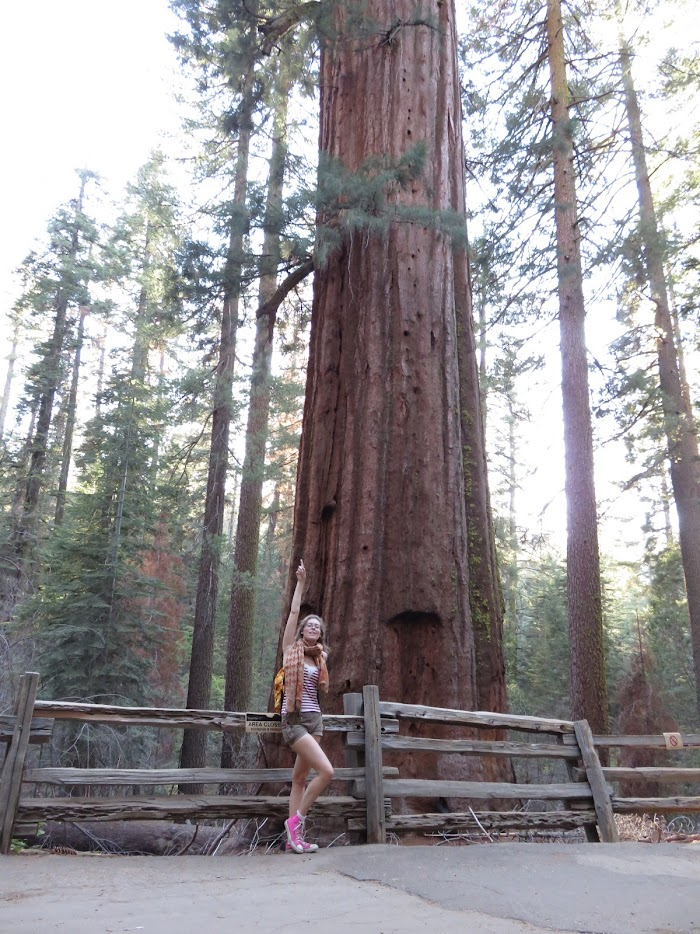 sequoia bomen in yosemite park tips yosemite park