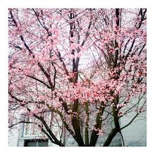 Photo: Beginning of spring, Seattle 2012