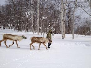 Photo: Random reindeer