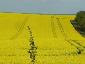 """Photo: das """"Gelbe Meer"""""""