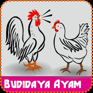 Bisnis Budidaya Ayam Sukses (Tekun) - náhled