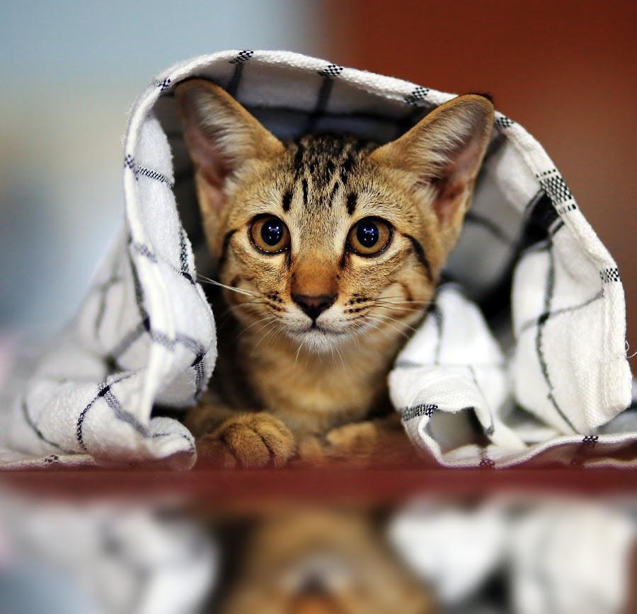 by Prachit Punyapor - Animals - Cats Kittens