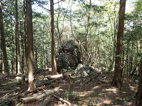 巨石にシャクナゲ