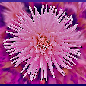 Pink Glory by Diana Postill - Nature Up Close Flowers - 2011-2013