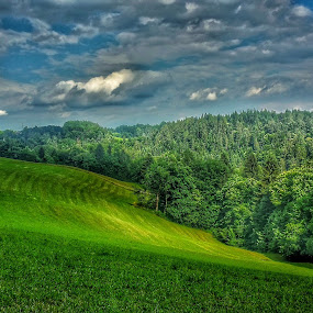 Maja by Andreja Svenšek - Landscapes Forests ( field, pasture, sky, tree, green, slovenia, trees, forest, view,  )