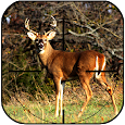 Deer Hunting Game 2018 icon