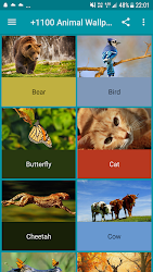 +1100 Animal Wallpapers
