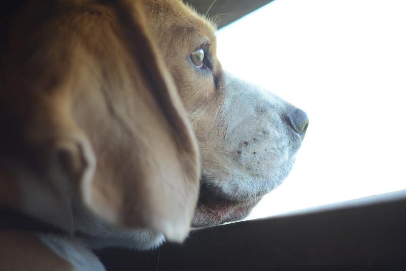 Un pensiero canino... di Wonderstruck_13