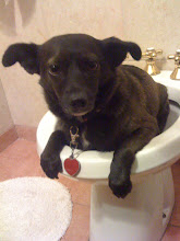 Photo: Malia being potty trained in the apartment bidet, for pee only