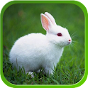 Rabbit Live Wallpapers icon