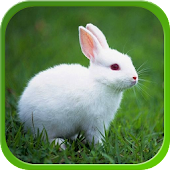 Rabbit Live Wallpapers