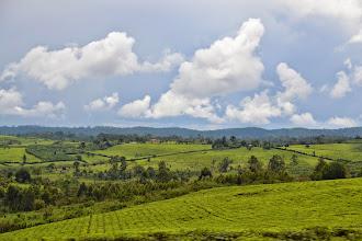 Photo: near Mubende - tea fields
