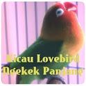 Kicau Lovebird Ngekek Panjang icon