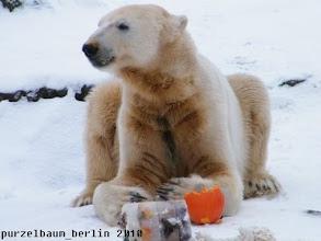 Photo: Knut mit Kuerbisnase ;-)