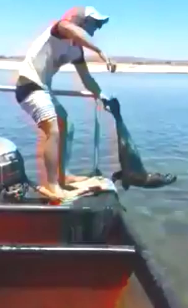 Video footage has emerged of a fisherman beating a young seal while out at sea