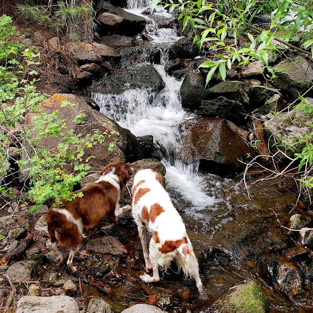 Boulder and Torrey in Pleasant Creek