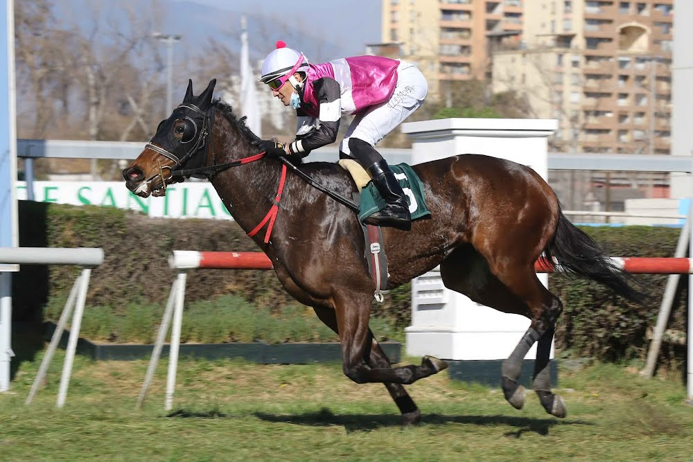 Freccia Rosa (Dangerous Midge) conquista el Clásico Carlos Valdes I. (G3-1600m-Pasto-CHS). - Staff ElTurf.com