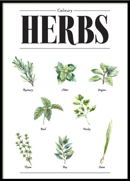 THE CULINARY HERBS, POSTER
