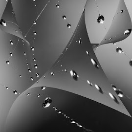 Raindrops  by Chris Seaton - Digital Art Abstract ( curves, raindrops, web, black and white, digital art )