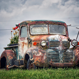 Old Dodge  by Todd Reynolds - Transportation Automobiles