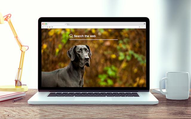 Great Danes New Tab Dog Theme