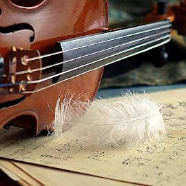 by Biljana Nikolic - Artistic Objects Musical Instruments (  )
