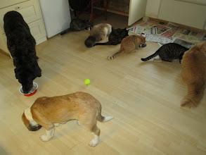 Photo: Kaikki koolla ensimmäistä kertaa Helmin tultua taloon.